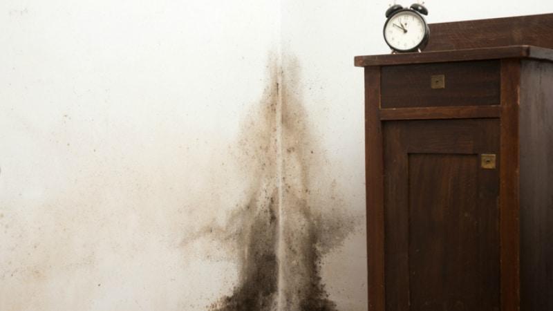 Полезные советы: Опасная плесень дома: как избежать появления и как избавиться, если она уже есть?