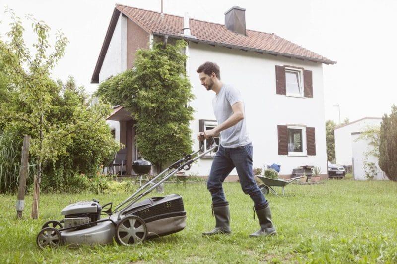 Домашние хитрости: Как вырастить идеальный газон