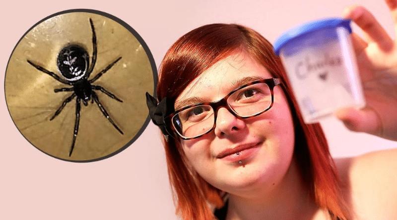 Общество: В винограде из супермаркета девушка нашла ядовитого паука рода «Чернаявдова»