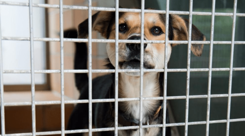 Общество: Как взять животное из приюта?
