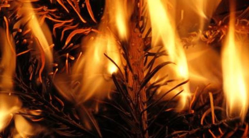 Закон и право: Важные решения суда в делах, связанных с рождественским декором и конфликтами соседей