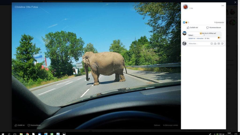 Происшествия: В Баварии 7,5-тонный слон разгуливал по проезжей части